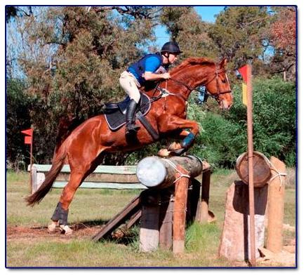Horse Riding Perth School Equestrian Riding School In